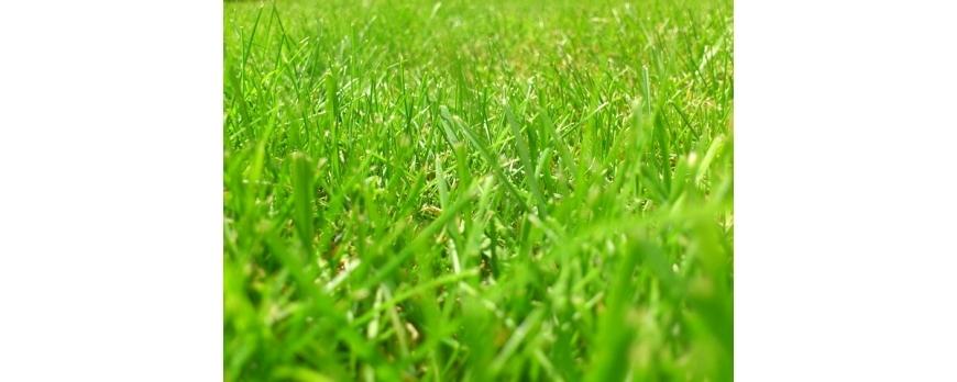 Comment semer et entretenir sa pelouse