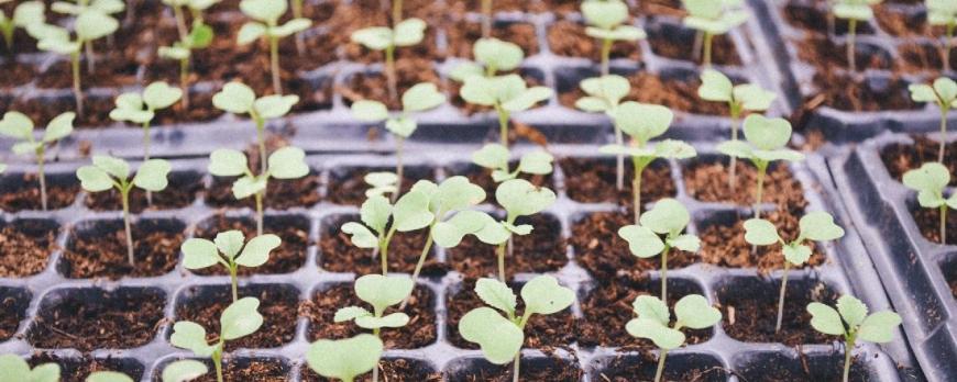 Comment planter une graine ?
