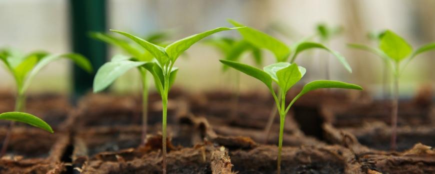 Quelles sont les erreurs de jardinage lorsque l'on débute ?