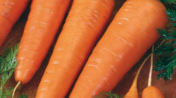 La culture des carottes