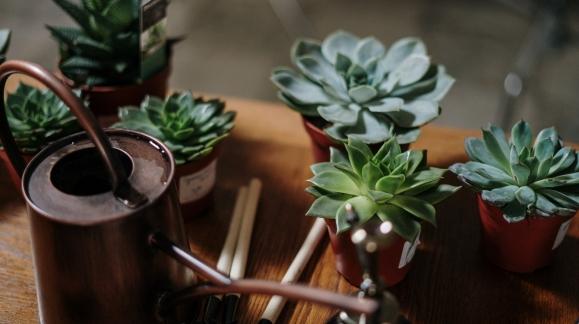 Comment arroser correctement ses plantes ?
